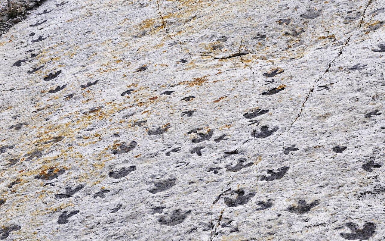 AWAYN IMAGE Hike around Dinosaur Ridge, Colorado