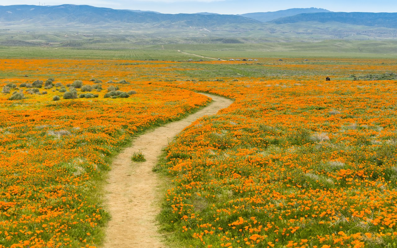 AWAYN IMAGE Explore Antelope Valley Poppy