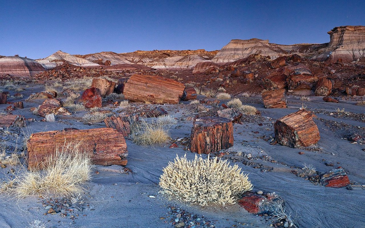 AWAYN IMAGE Petrified Forest National Park