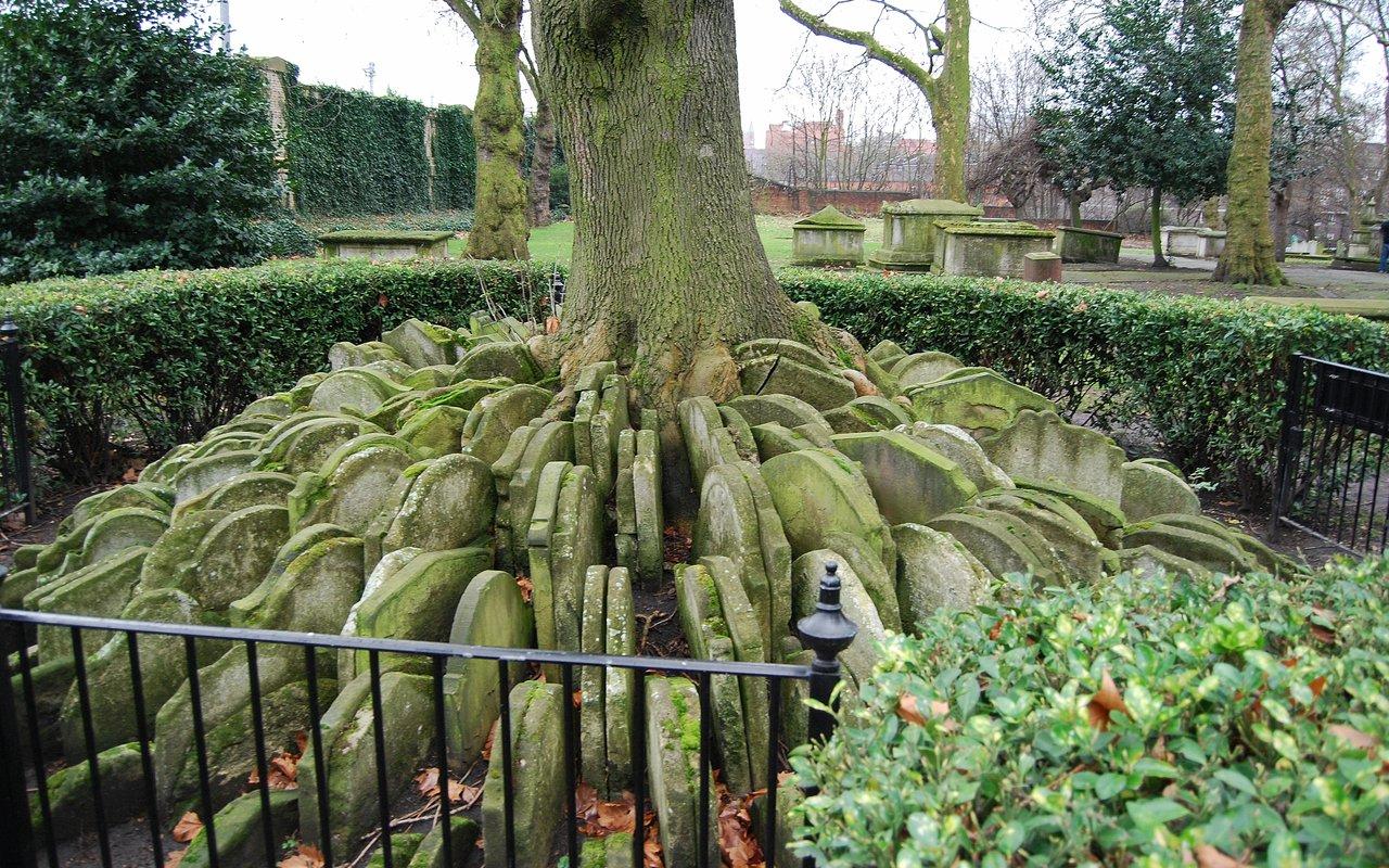 AWAYN IMAGE The Hardy Tree