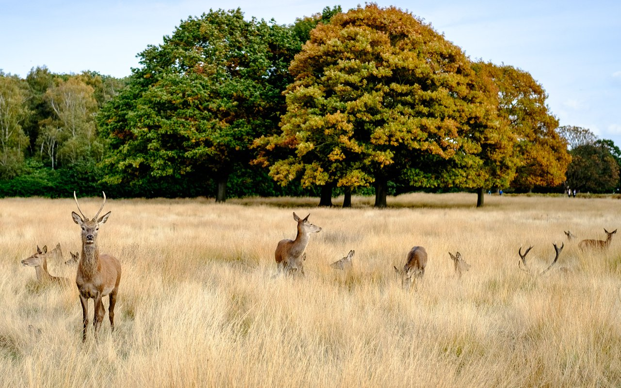 AWAYN IMAGE Richmond Park