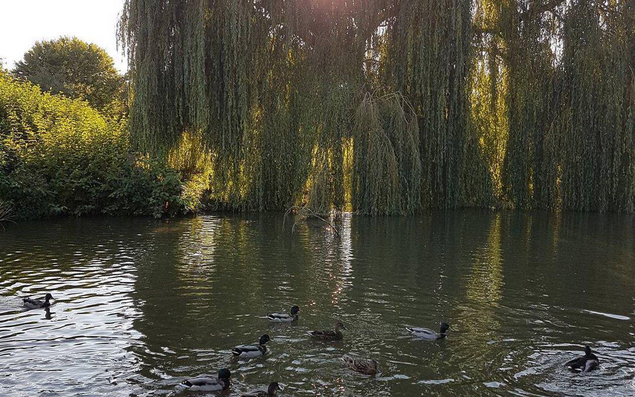 AWAYN IMAGE Walk in Grand Union Canal