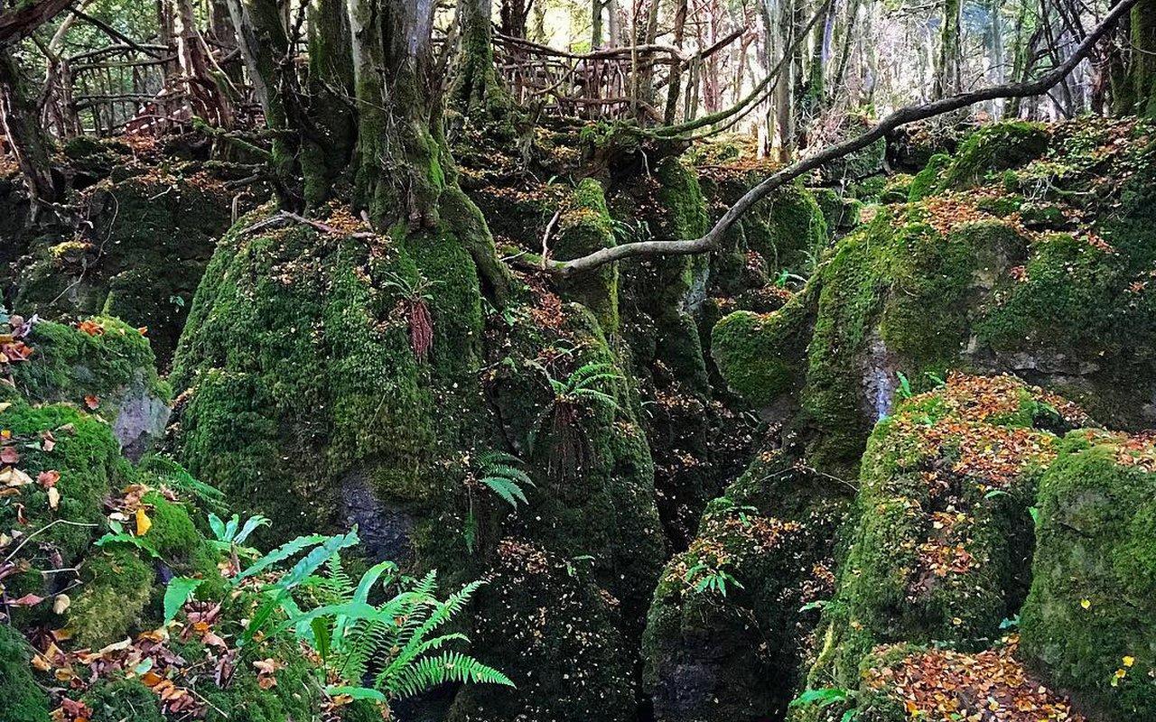 AWAYN IMAGE Puzzlewood walk