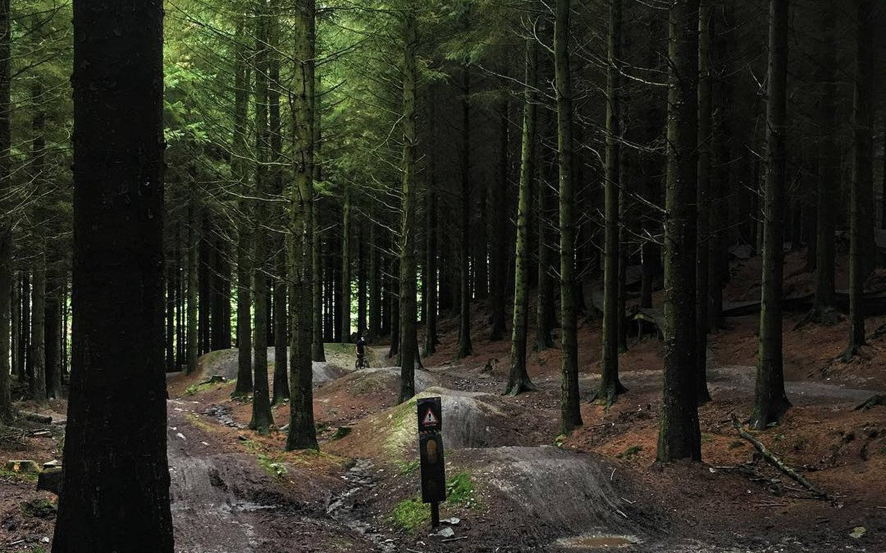 AWAYN IMAGE Mountain biking in Coed Llandegla Forest