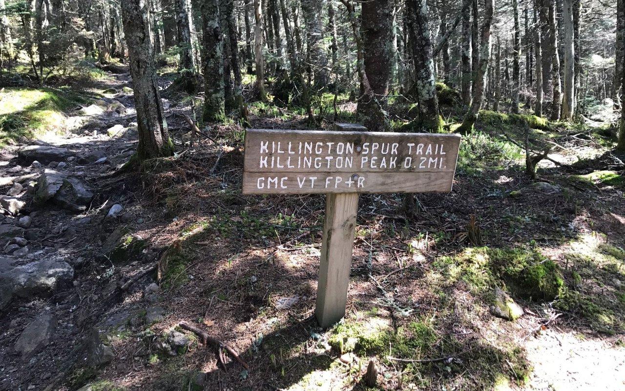 AWAYN IMAGE The Green Mountain National Bucklin Trail to Killington Peak
