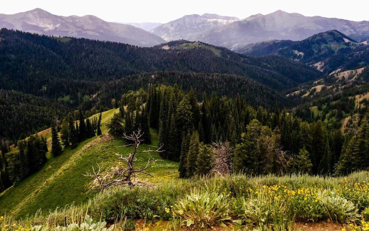 AWAYN IMAGE Tetonia Idaho