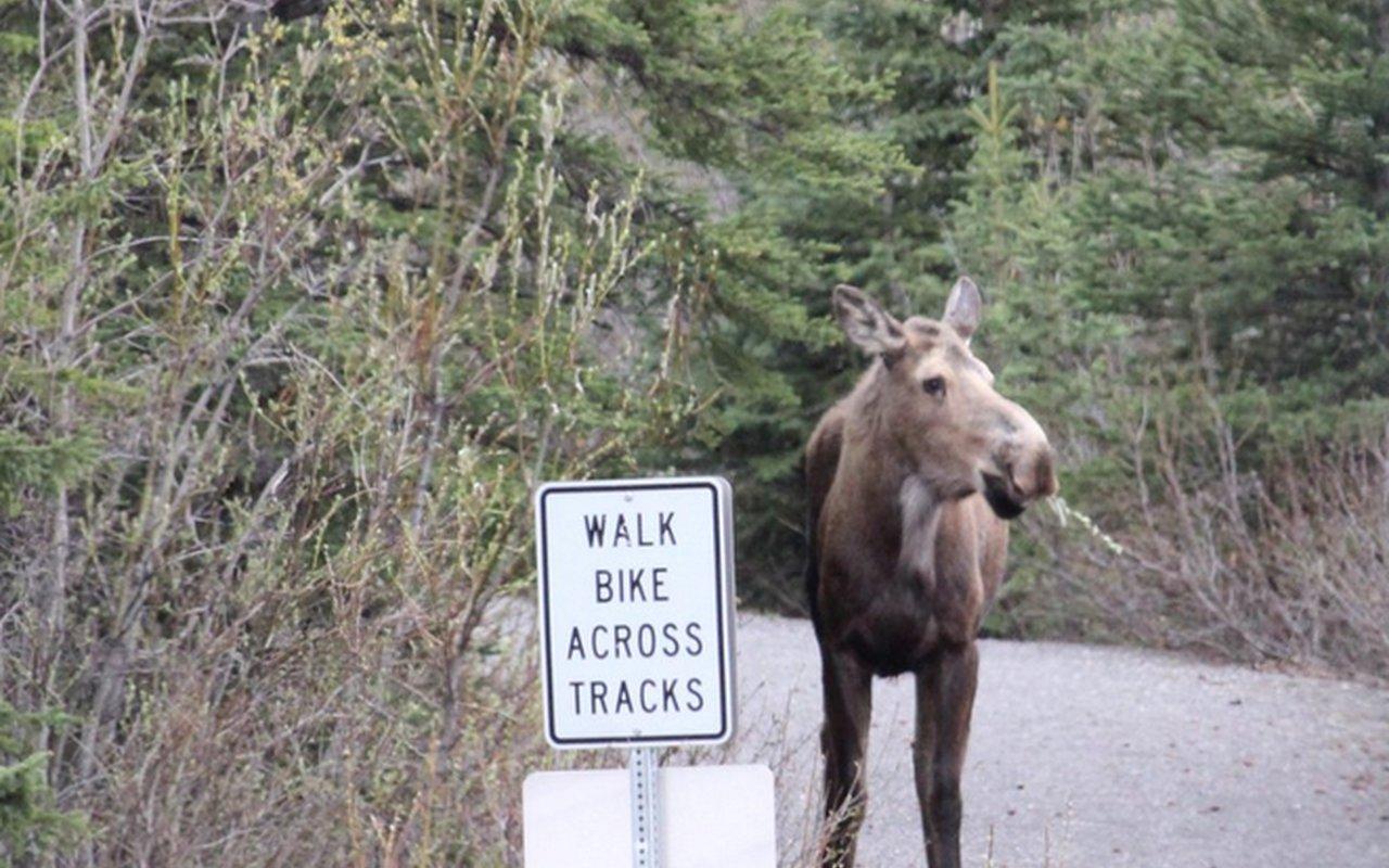 AWAYN IMAGE Denali National Park Adventures in AK