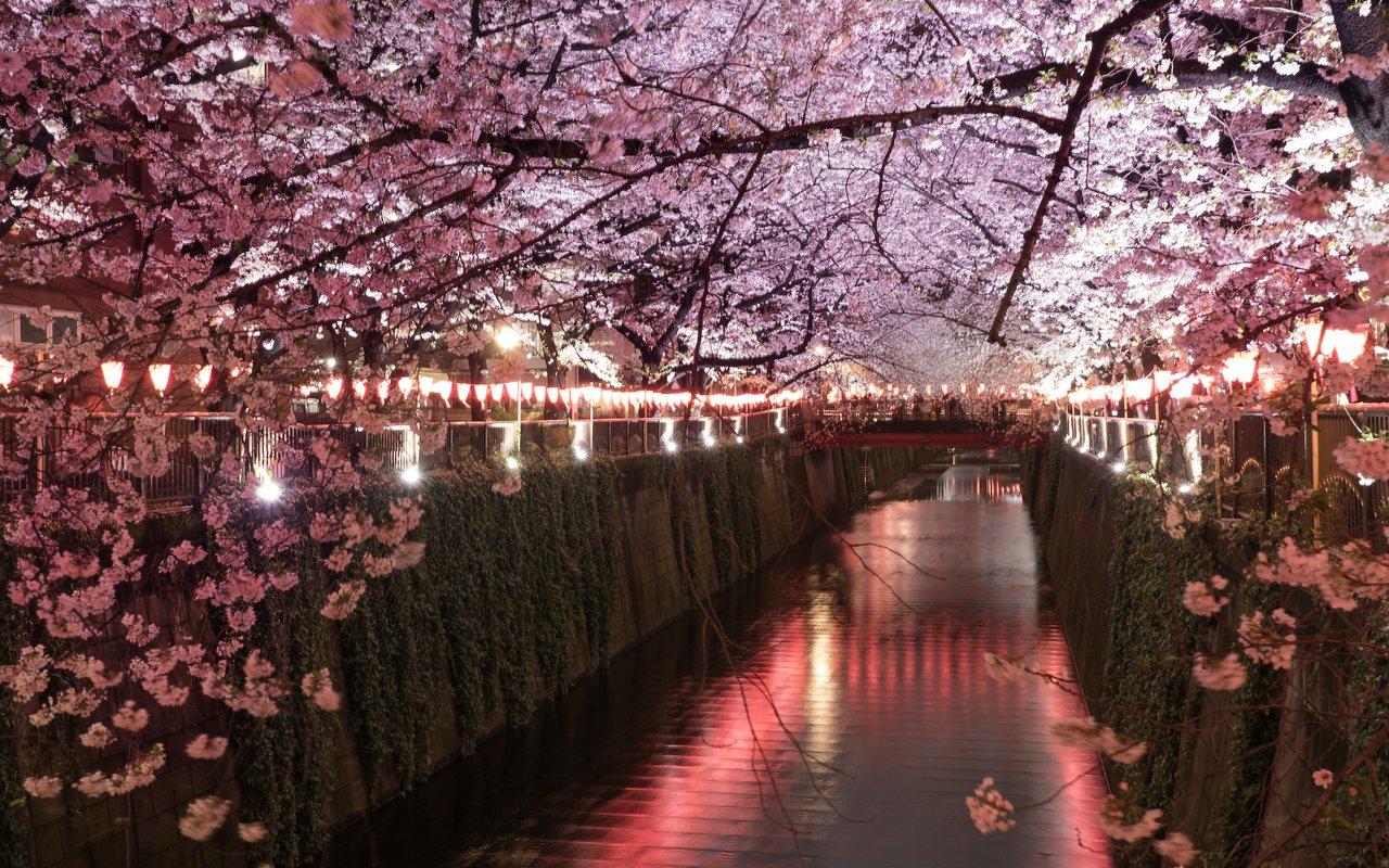 AWAYN IMAGE Photograph the Meguro River Cherry Blossoms Promenade