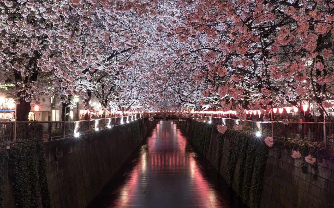 AWAYN IMAGE Photograph the Meguro River Cherry Blossoms Promenade