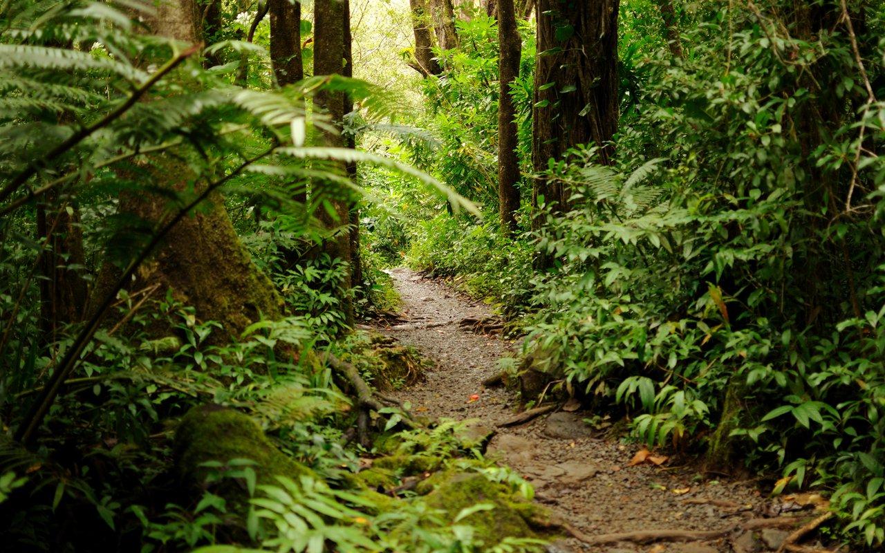 AWAYN IMAGE Manoa Falls Trail