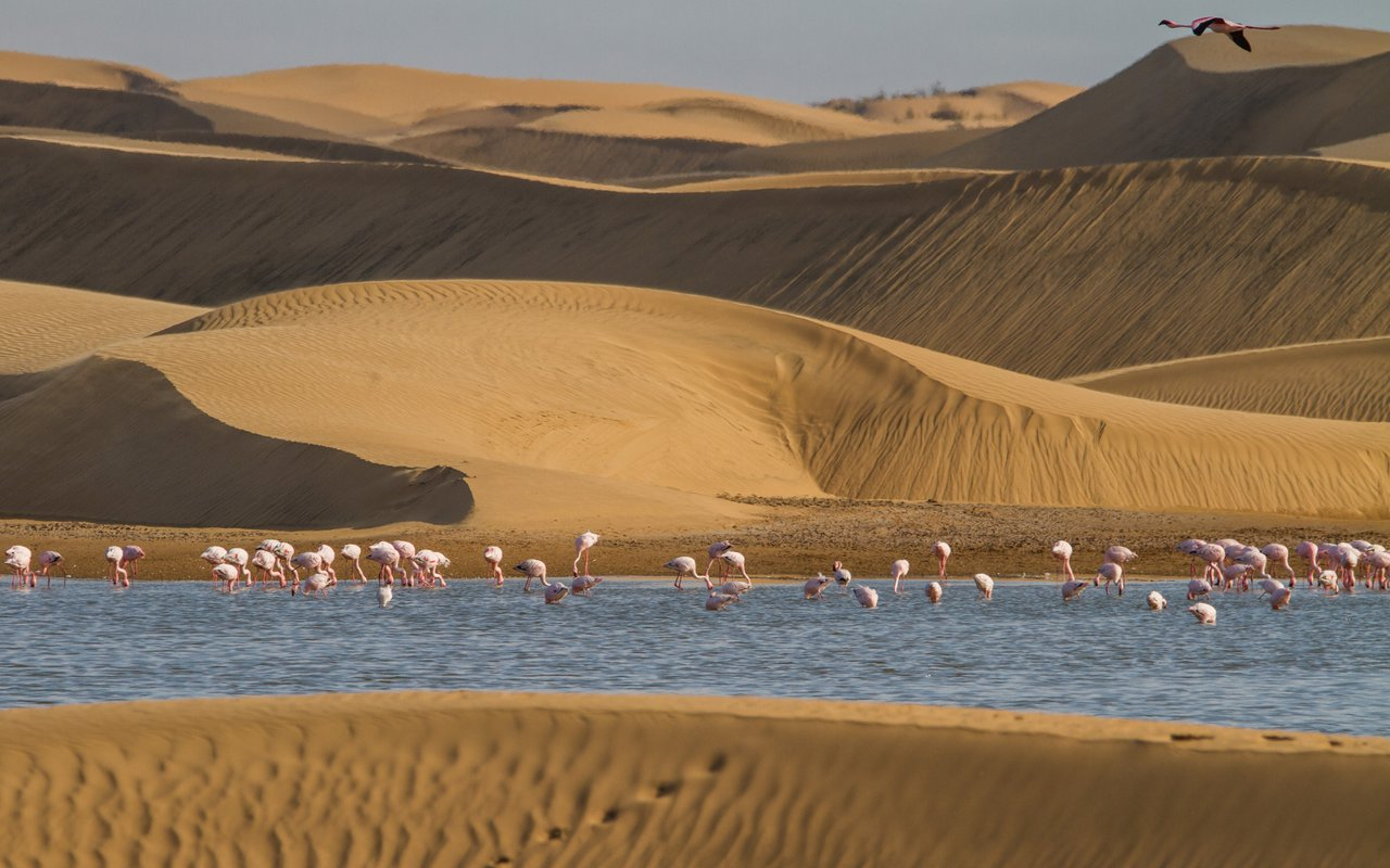 AWAYN IMAGE Flamingos in Walvis Bay