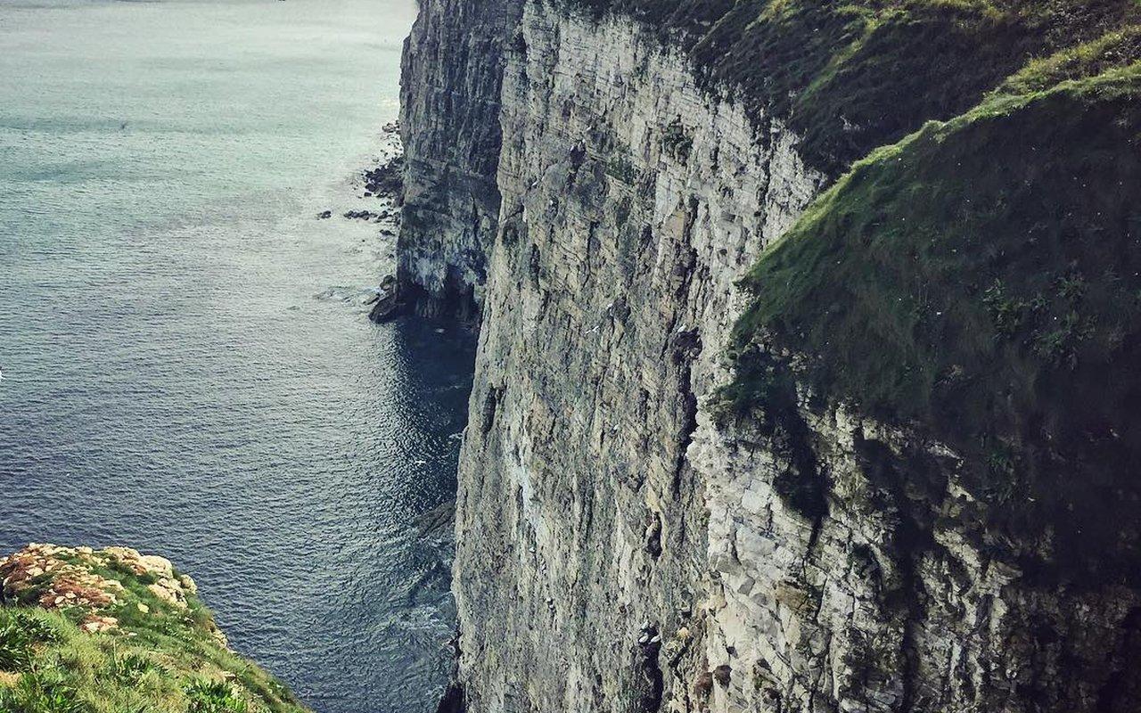AWAYN IMAGE RSPB Bempton Cliffs birds