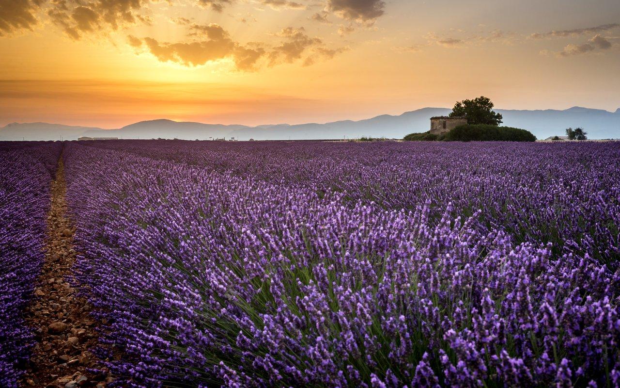 AWAYN IMAGE Capture lavender fields Plateau de Valensole