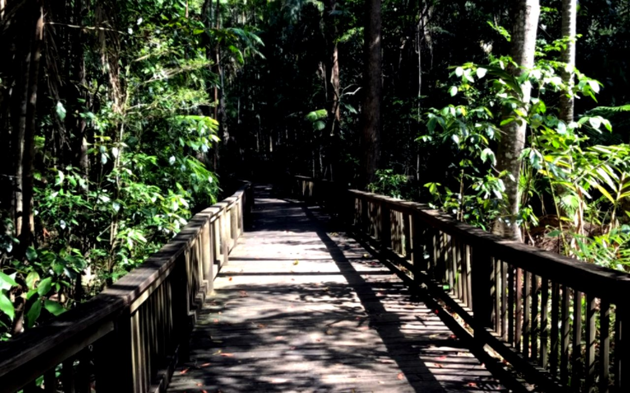 AWAYN IMAGE Hike in Buderim Forest Park