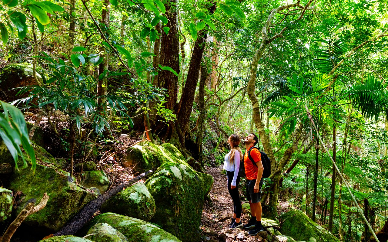 AWAYN IMAGE Hike to Natural Bridge, Springbrook National Park
