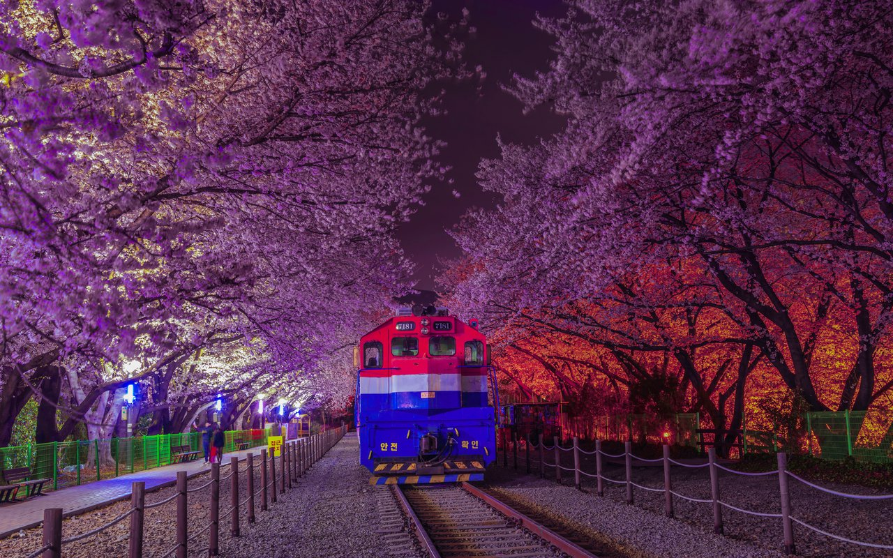 AWAYN IMAGE Visit the Gyeonghwa Station (Cherry Blossom Road) 경화역 벚꽃길