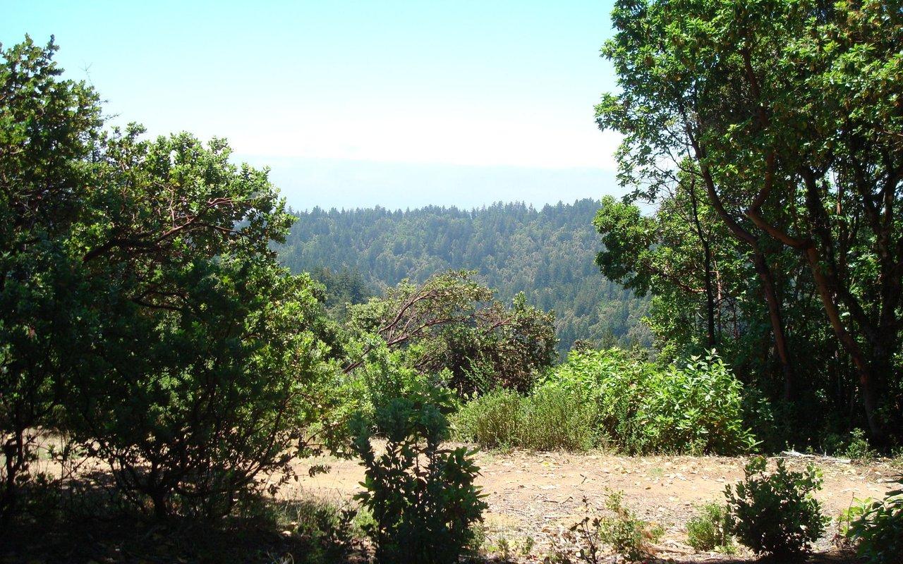 AWAYN IMAGE Tafoni and Fir Trail