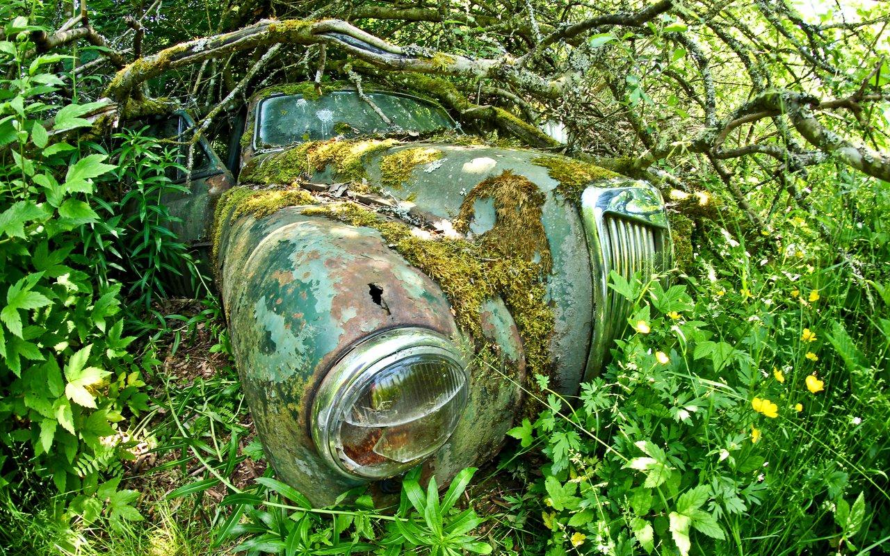 AWAYN IMAGE The Unusual Kyrkö Car Cemetery