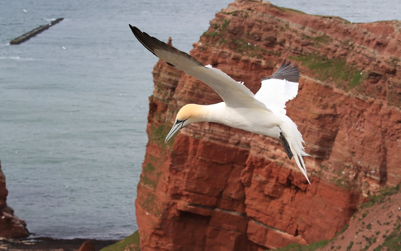AWAYN IMAGE Birdwatching Tour on Heligoland Island