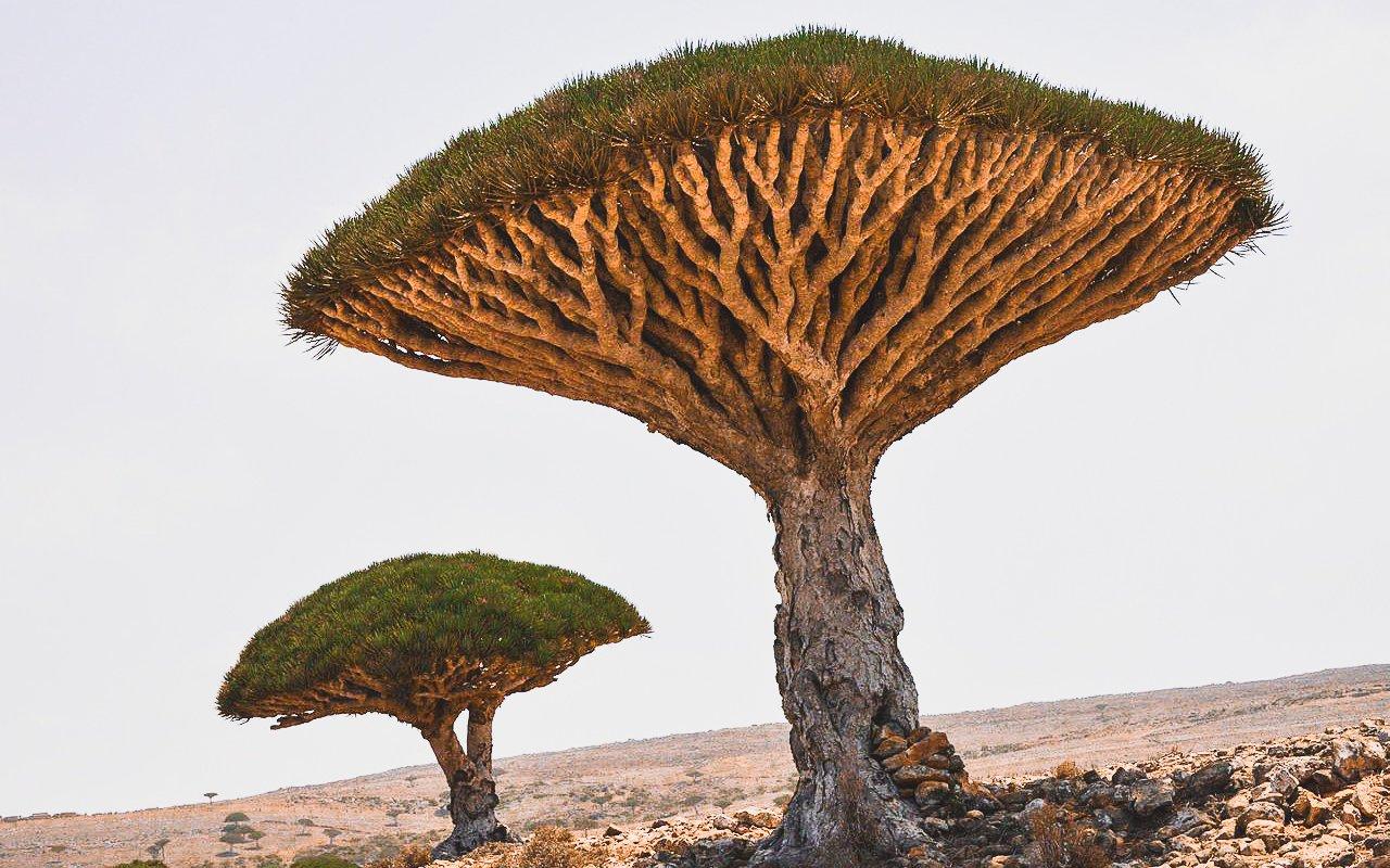 AWAYN IMAGE Diksam Plateau (Socotra Island)