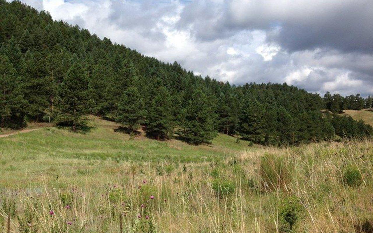 AWAYN IMAGE O'Fallon Park Upper Loop Trail
