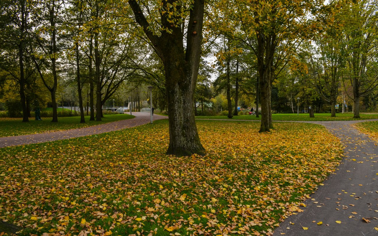 AWAYN IMAGE Long run in Rembrandt Park