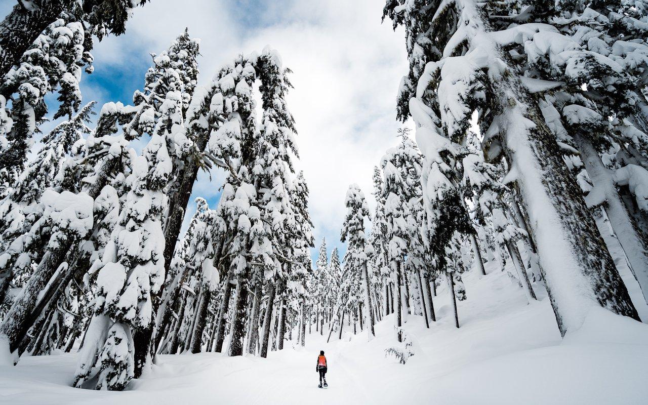 AWAYN IMAGE Mt Bachelor Ski Resort Tour Experience