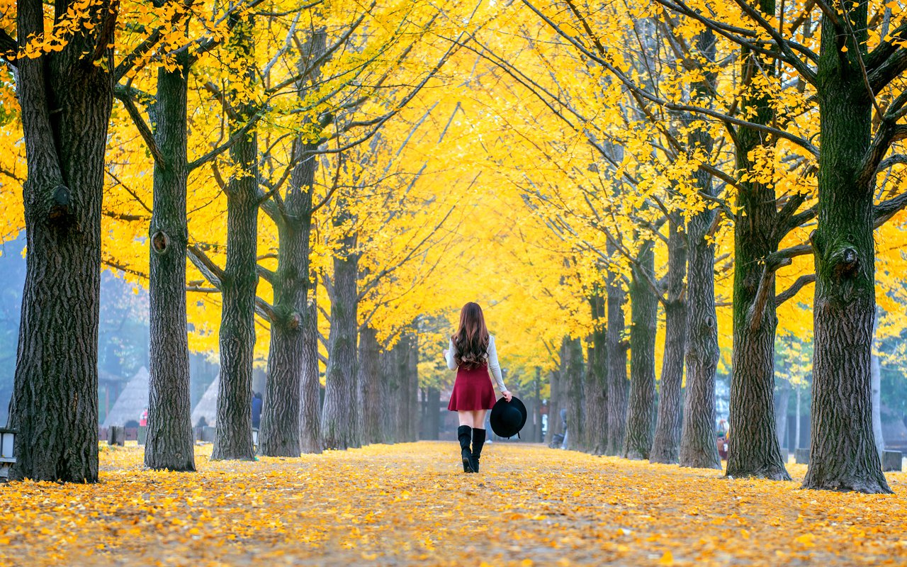 AWAYN IMAGE Stunning Autumn View in Ginko Tree Lane