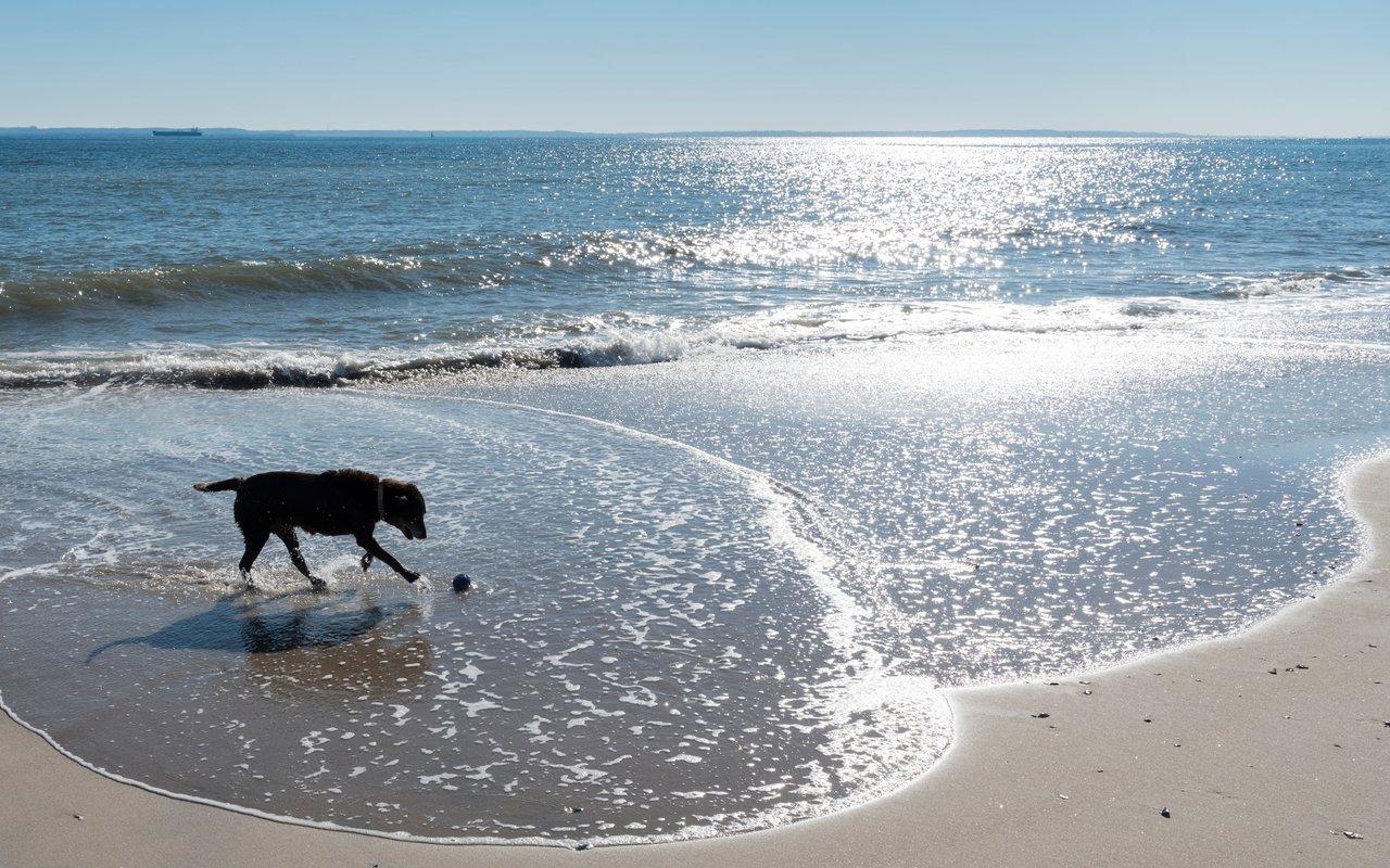 AWAYN IMAGE Walk Your pups at Brighton Beach