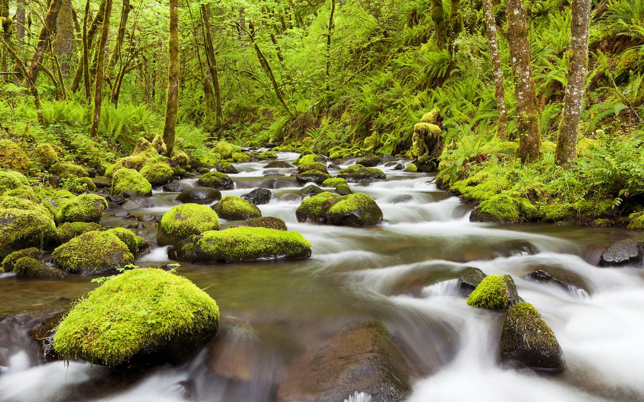 AWAYN IMAGE Gorton Creek Falls Hike