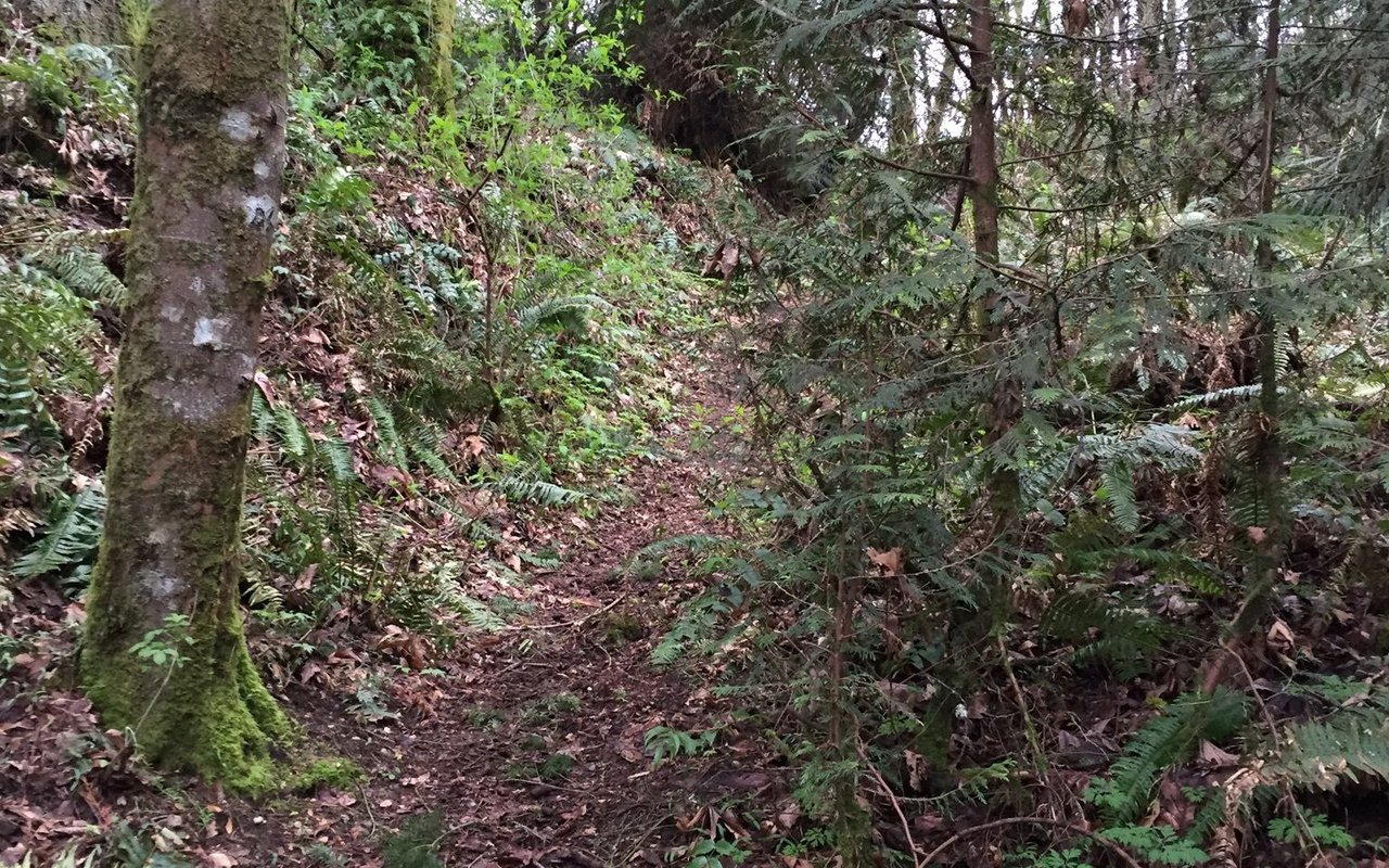 AWAYN IMAGE Clark's Creek Trail