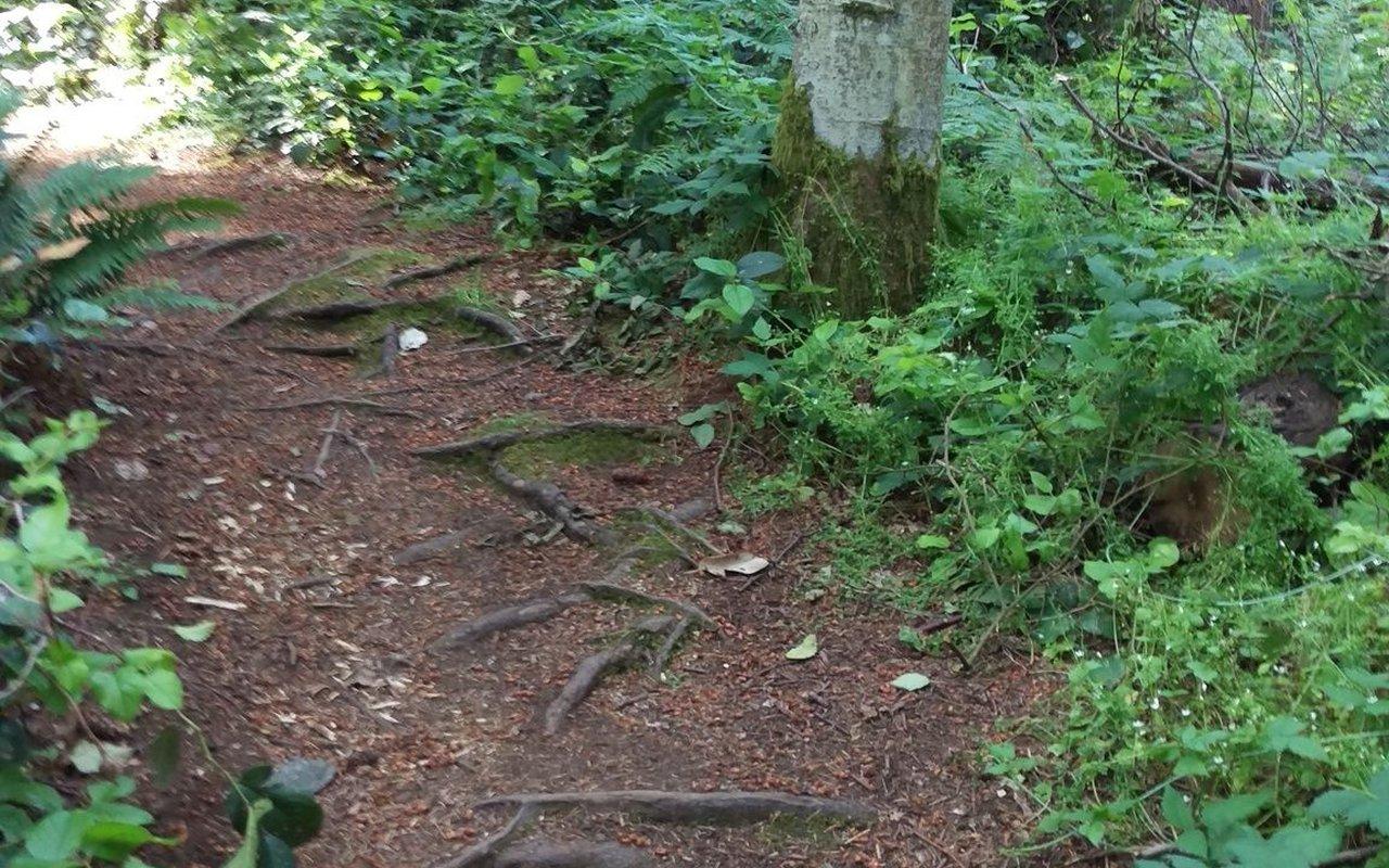 AWAYN IMAGE Dash Point Trail
