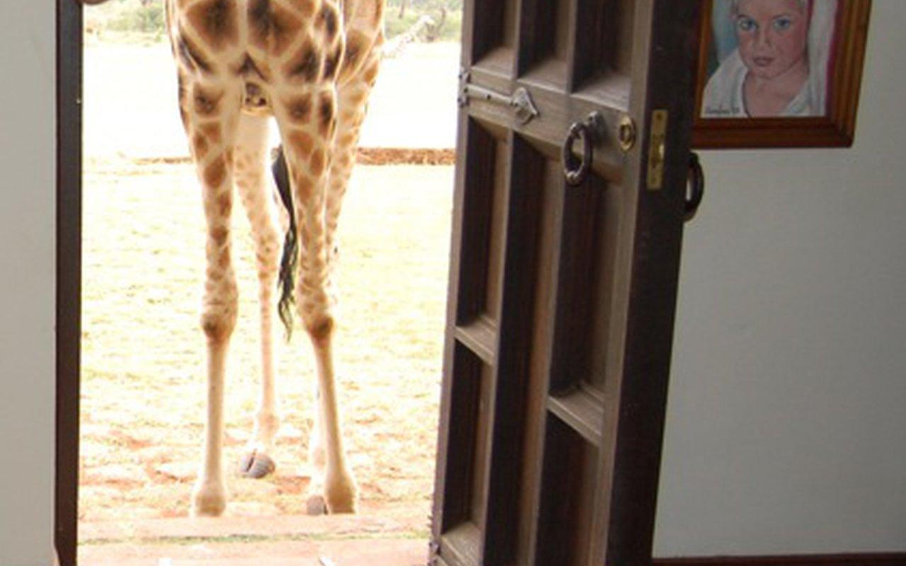 AWAYN IMAGE Stay in Giraffe Manor Hotel