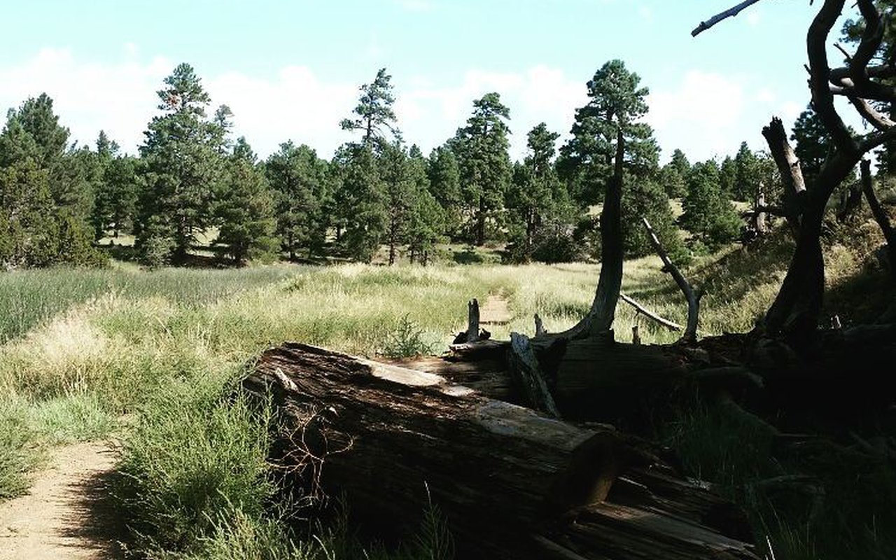 AWAYN IMAGE Tom Moody Trail