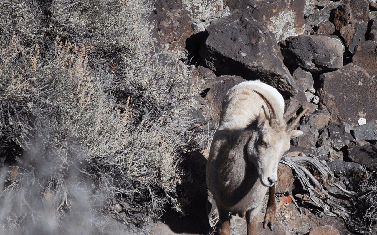AWAYN IMAGE Berminator at Taos