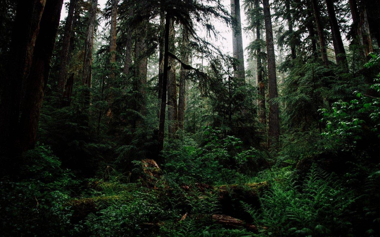 AWAYN IMAGE Backpack to Hoh Rain Forest Visitor Center, Forks