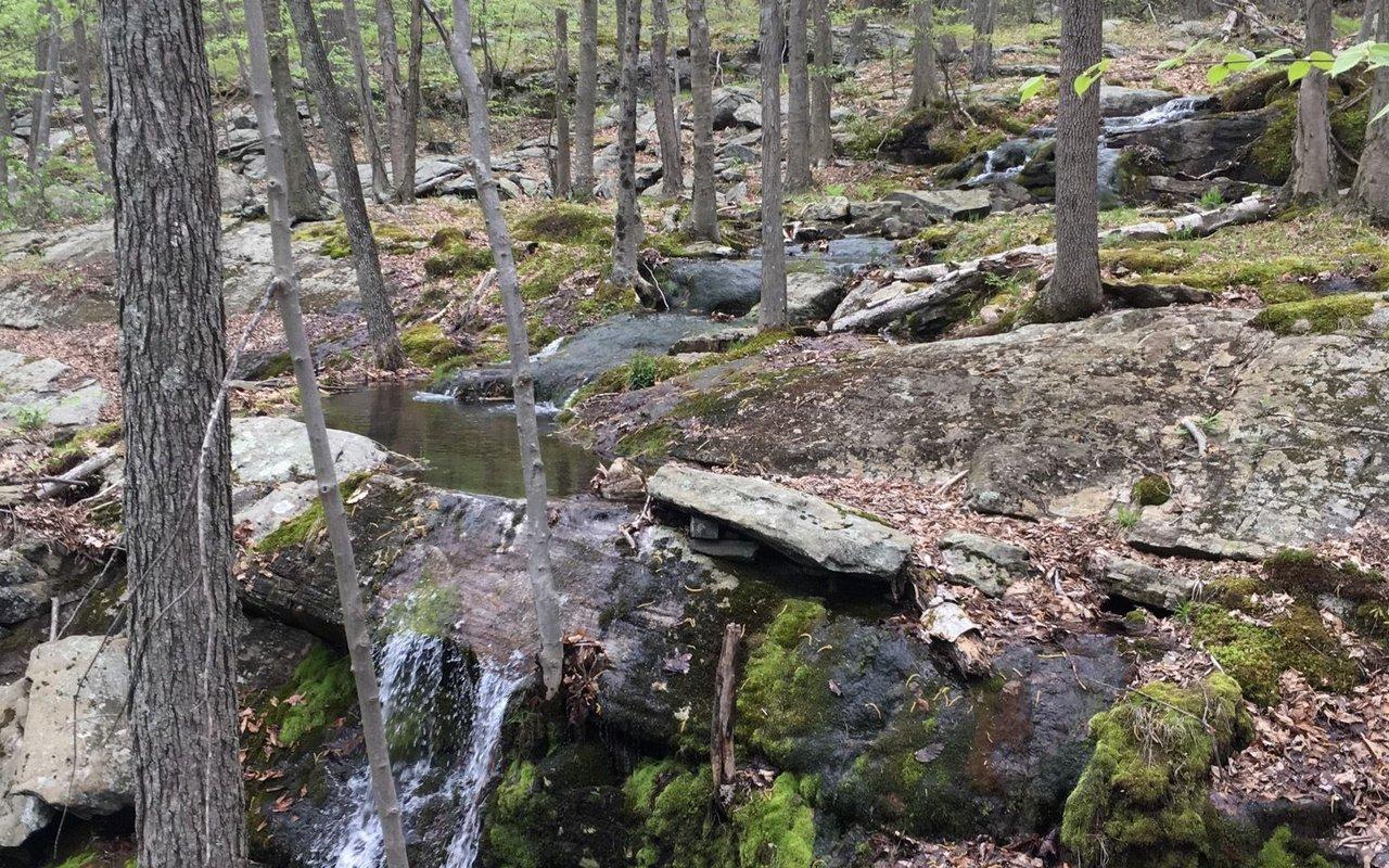 AWAYN IMAGE Reeves Brook Loop Trail