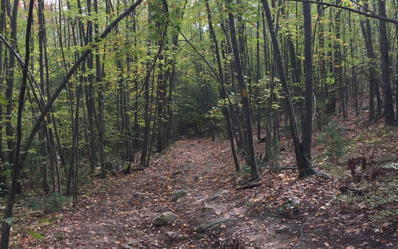 AWAYN IMAGE Wolf Hill Forest Perserve Trail
