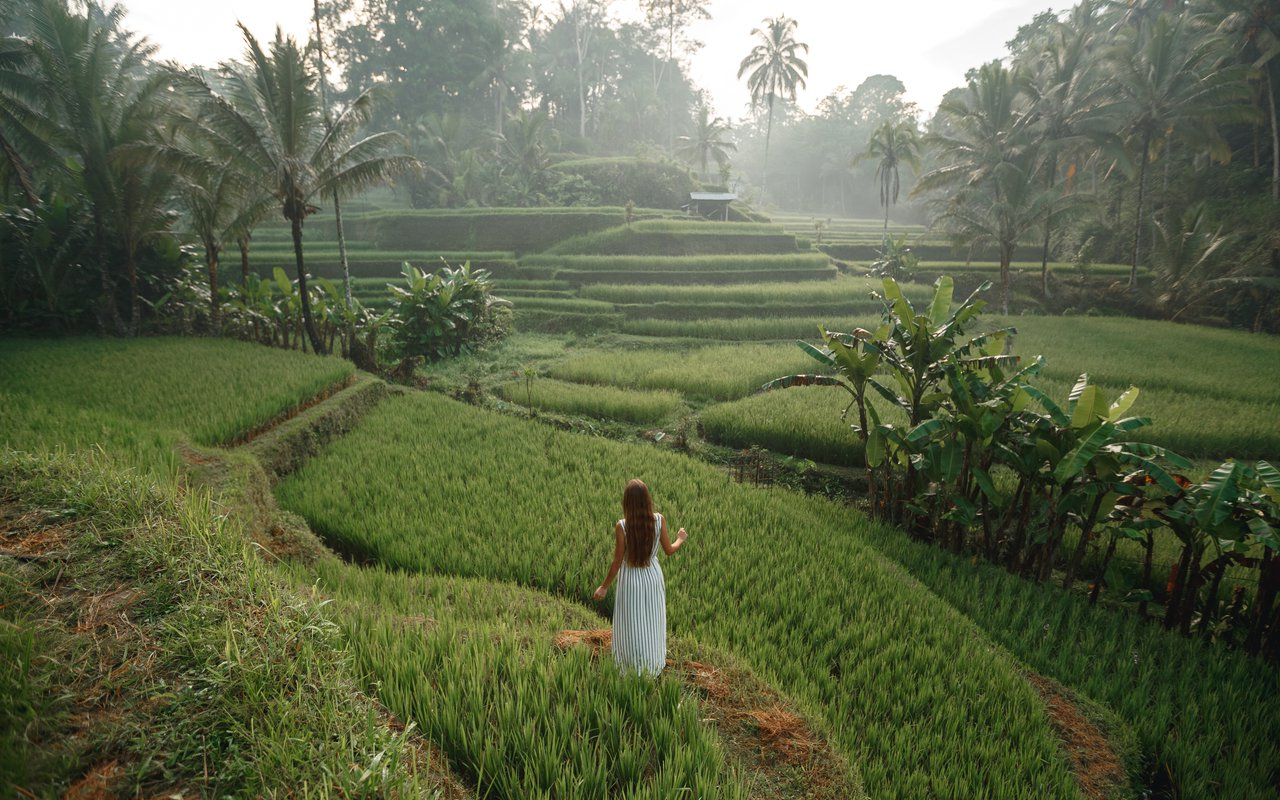 AWAYN IMAGE Explore the Tegallalang Rice Terrace