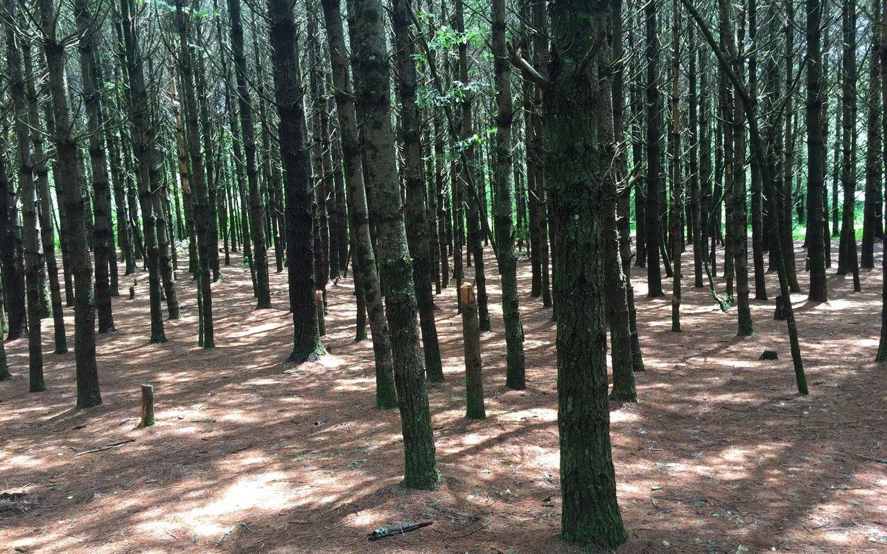 AWAYN IMAGE Panthertown Trail Sapphire, NC