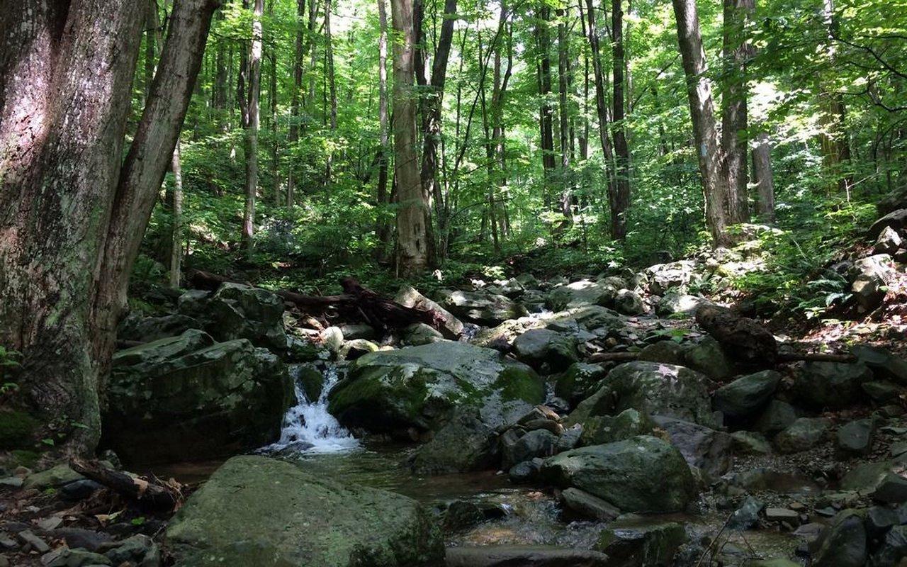 AWAYN IMAGE Hike in Lewis Spring Falls Trail near Stanley, Virginia