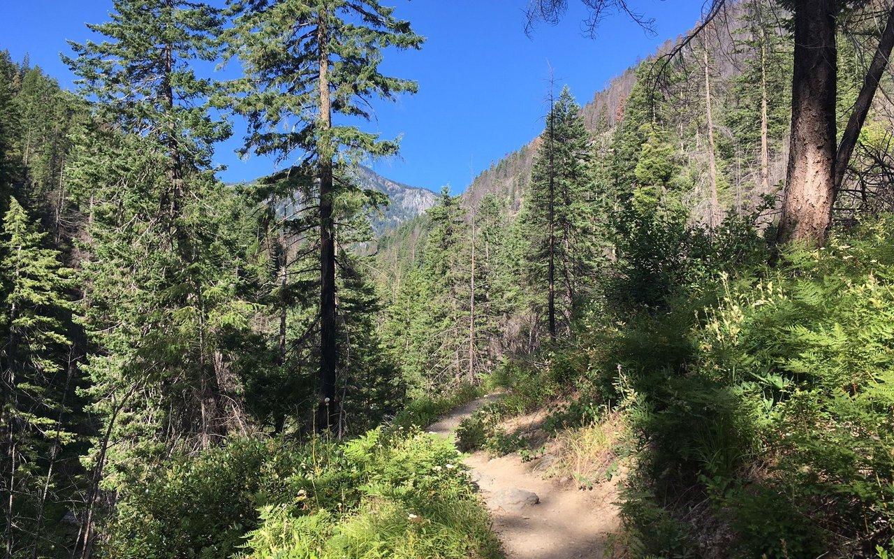 AWAYN IMAGE Hike in Ingalls Creek Trail