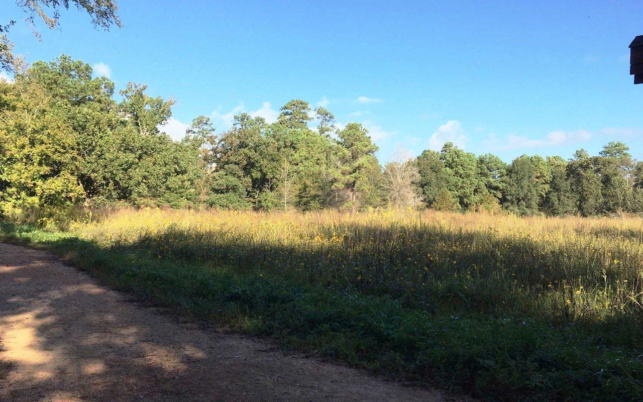 AWAYN IMAGE Houston Arboretum