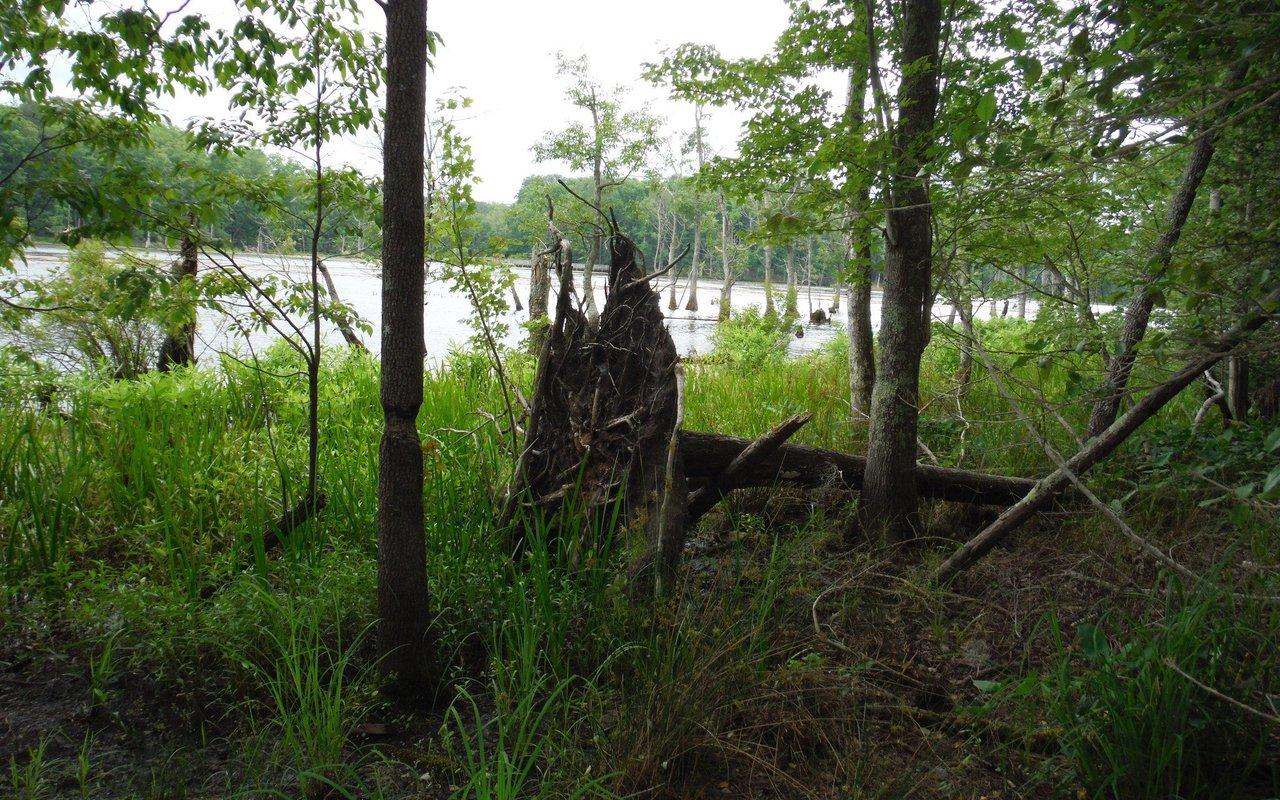 AWAYN IMAGE Newport News Bieway and Swamp Bridge Loop Trail