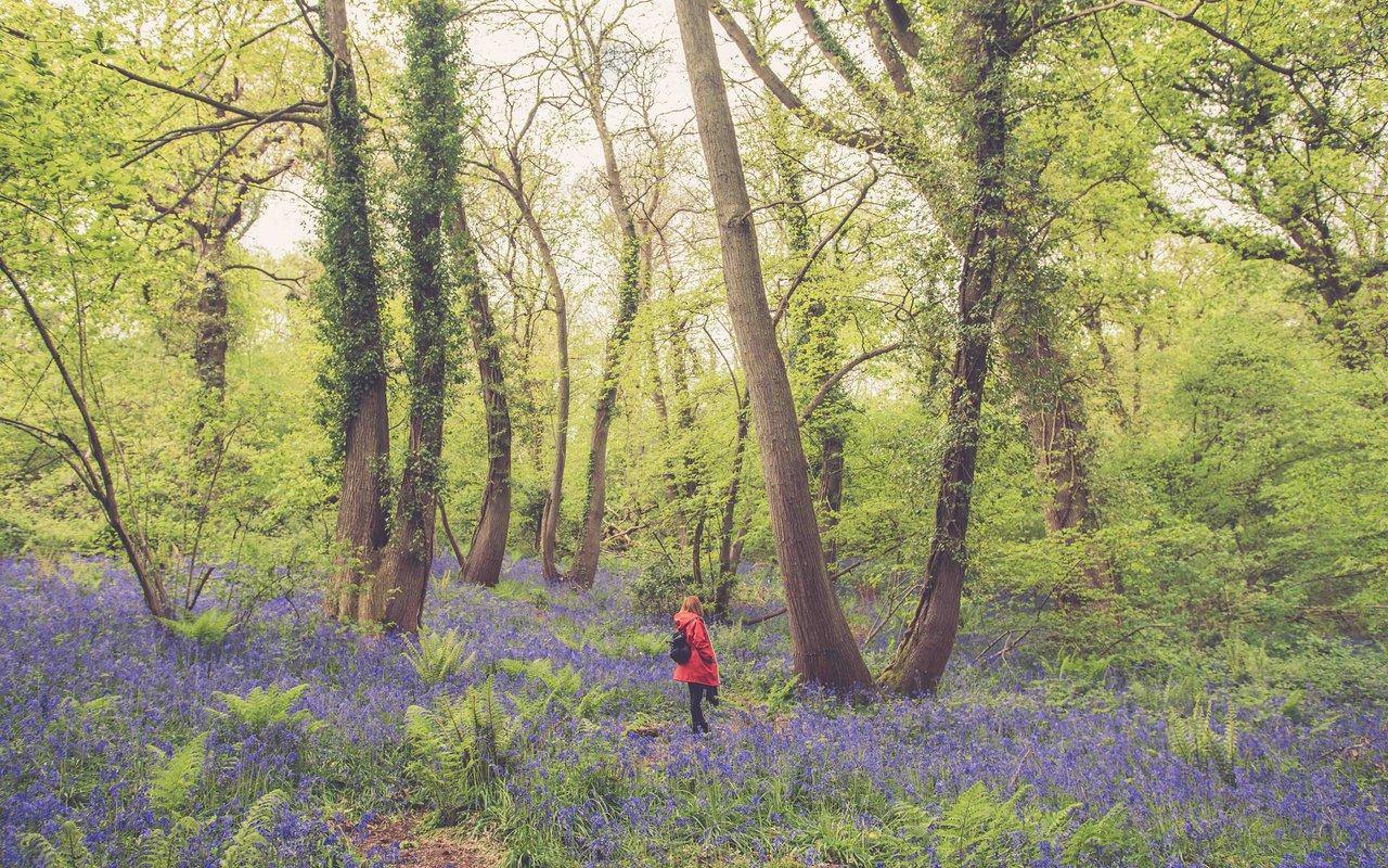 AWAYN IMAGE Walk in Prior's Wood