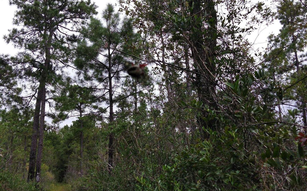 AWAYN IMAGE Palmetto Trail Swamp Fox Passage
