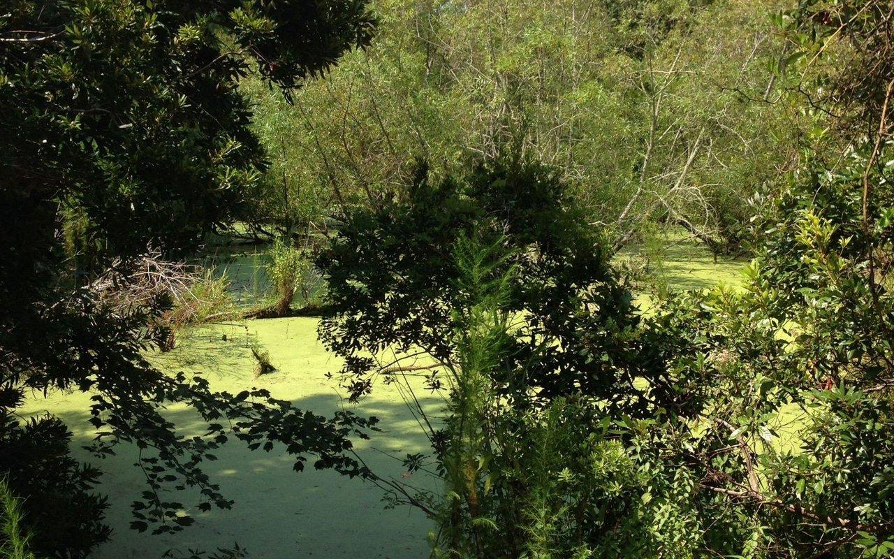 AWAYN IMAGE Emerald Isle Woods Trail