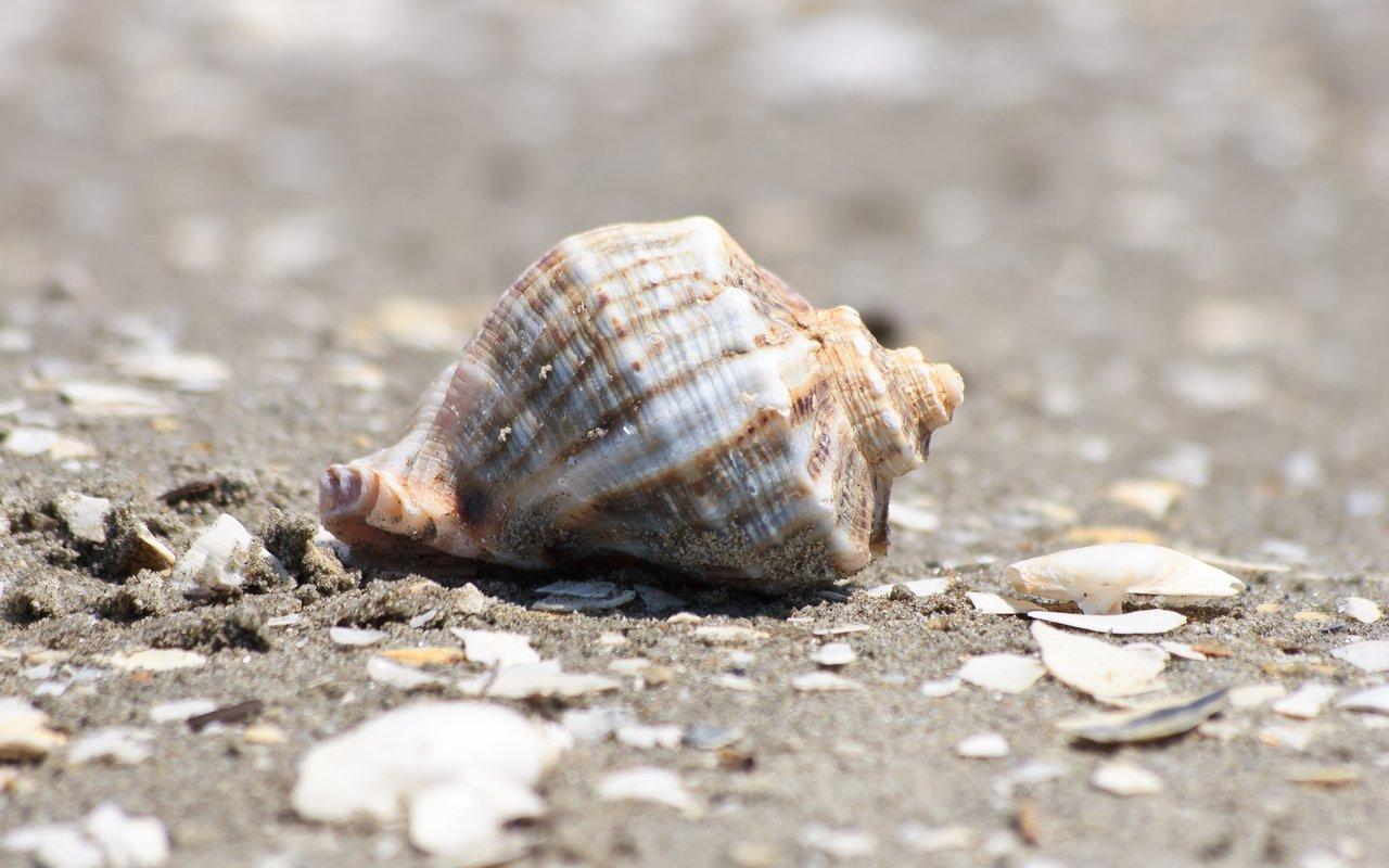 AWAYN IMAGE Shell Beach