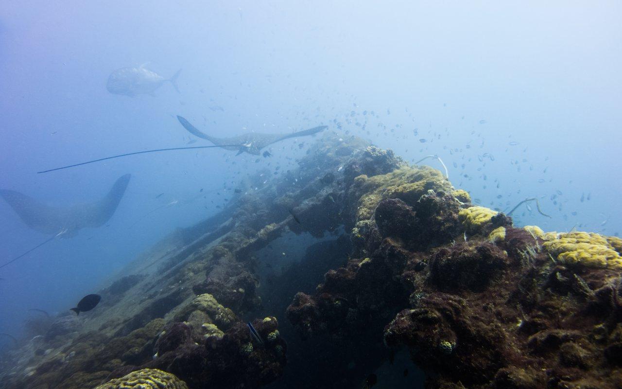 AWAYN IMAGE SS Yongala Shipwreck