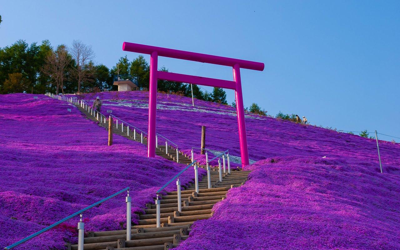 AWAYN IMAGE Photograph the Hitsujiyama Park Shibazakura Hill